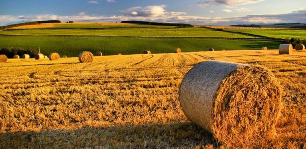 Finanziamenti agevolati in agricoltura